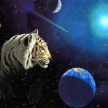 Tiger In Space!