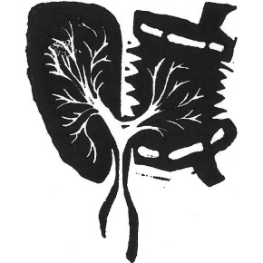 a lung and a concertina